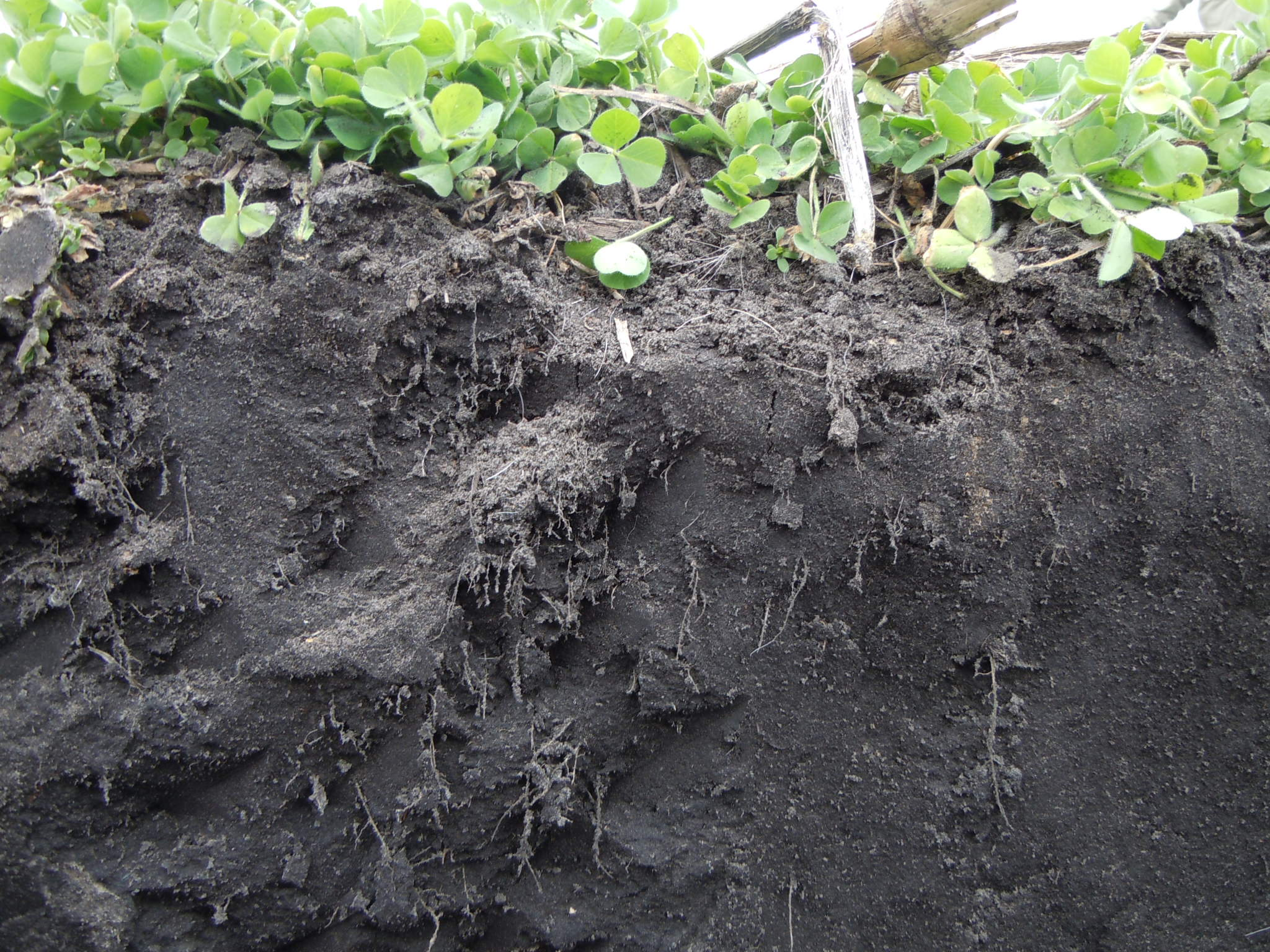 Cover Crops underground…I was not disappointed, I was a ...