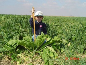 "The Oats are nearly 30"" tall and the turnips are around 18"" in this Oactober photo.  The Cereal Rye was about 6"" tall at this time.  This mixture was planted in late August and the photo was taken Oct 22 - approximately 8 weeks after planting.  My daughter Grace was the model.."