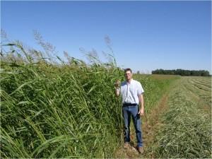 Pro Max BMR Hybrid Sudangrass.