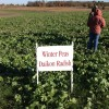 2012 Noble County Test Plots Peas and Radish