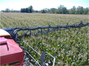 Although not as fast as aerial applying cover crops; a high-boy type spreader does a fabulous job. Here is Andy Ambriole from near Ft. Wayne, IN applying Craig Simon's cover crop grazing mix of Oats, Winter Cereal Rye, and Appin Turnips in late August 2012.