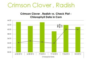 Just like the peas gave us an advantage over the no cover crop check the crimson clover showed very favorably.