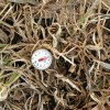 The soil temperature on March 29, 2013 at approximately 4 inches in an annual ryegrass cover crop.