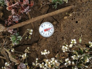 Soil temperature reading on March 29, 2013 in no-till soil.