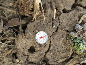 The soil temperature on March 29, 2013 at approximately 4 inches in fall tilled soil.