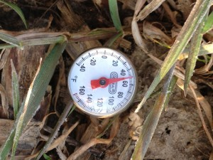 Soil temperature in the Annual Ryegrass cover crop plot 4-5-2013