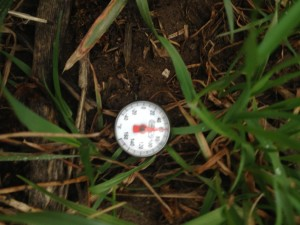 The soil temperature in the long-term no-till soil with a cover crop.  Note that the soil looks drier and it is also the warmest reading this week.