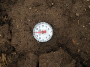 The soil temperature in the fall-tilled soil on 4-12-2013.  The soil doe not look as wet as the no-tilled soils.  Maybe the water went down the cracks!