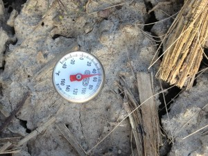 Soil temperature in the fall tilled soil 4-5-2013
