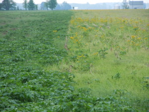 There are thousands upon Thousands of acres - mainly in the upper Midwest not planted in early June 2013.