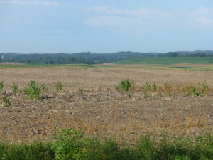 You can seemingly look for miles without seeing a cash crop planted in some areas of SE Minnesota
