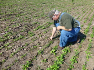 Brad Hagen looking at his Pasja Hybrid Brassica and Berseem clover. These are brand new species to Brad.