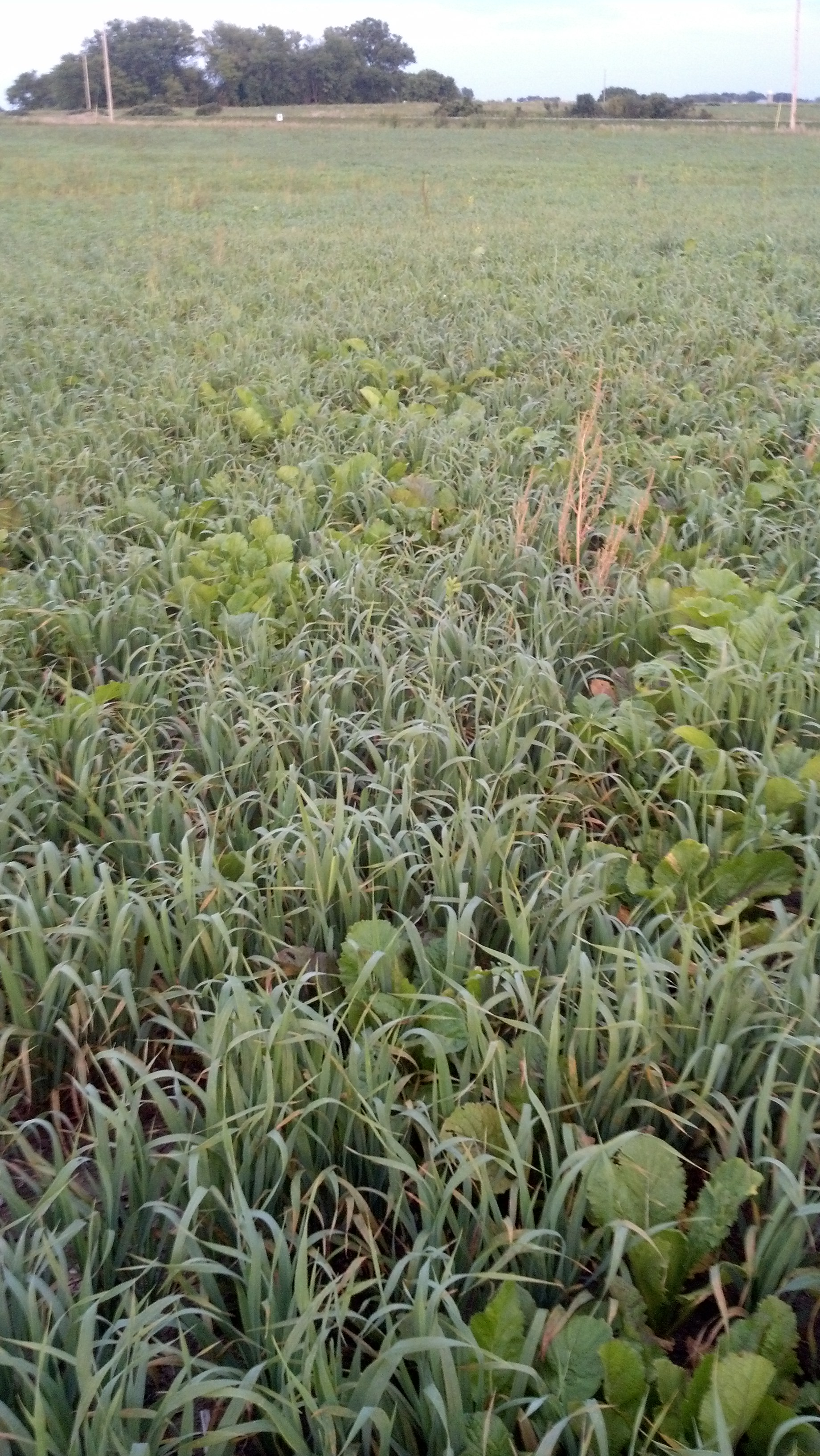 fall cover crop management