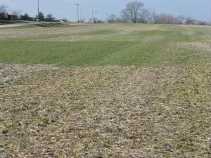 I cannot wait for warmer temperatures so we can see what cover crops survived this past record setting-cold winter.